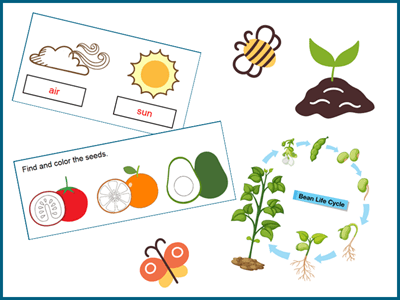 Spring plant activity and worksheets