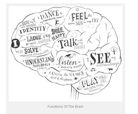 The human brain and nervous system for KS1 and KS2 children | The ...