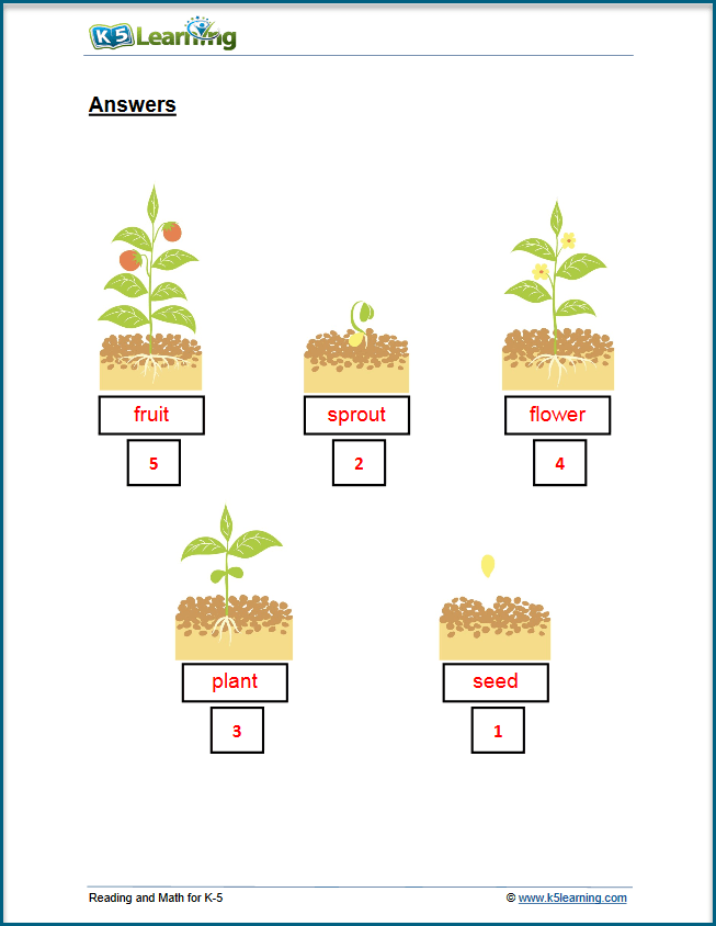 plant lifecycle answers